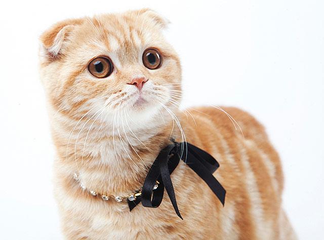 猫アレルギーなのに猫好き